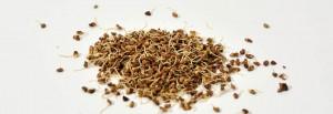 graines germées cru bio raw organic alfalfa