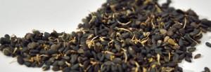 graines germées de sésame cru biologique raw organic sesame sprouted seeds